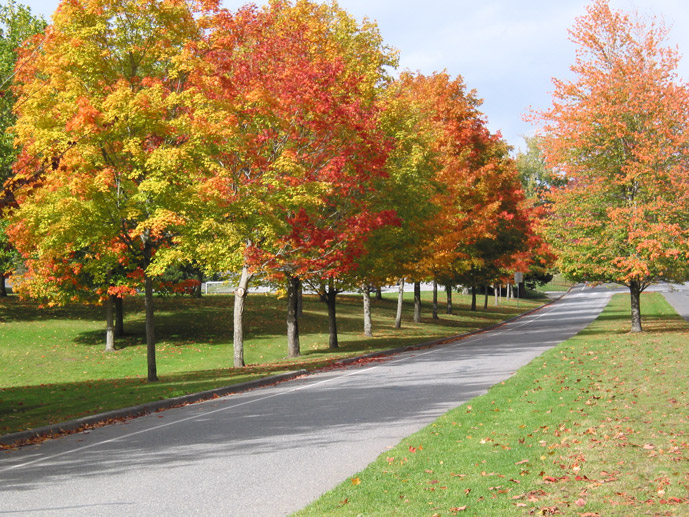 A road lined with trees in the fall.